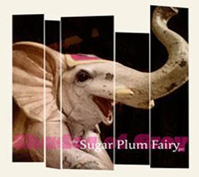 The Sugar Plum Fairy pr.
